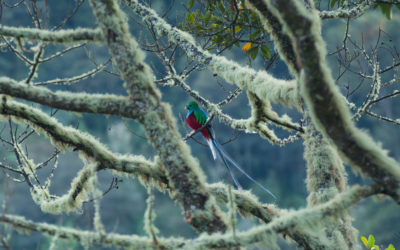 Le déploiement du Quetzal